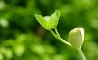 种子生产与经营专业就业前景