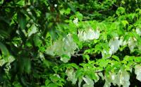 广东惠州农业学校植物保护专业