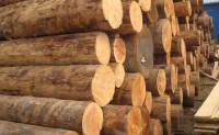 木材加工专业就业前景及方向